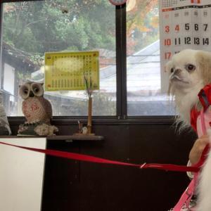 ふくろう茶屋店内犬OK