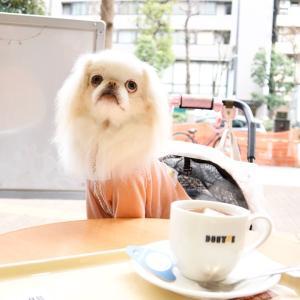 ドトールコーヒーショップ 池袋グリーン大通り店テラス石犬OK