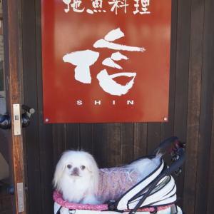 地魚料理信(SHIN)犬テラス席OK