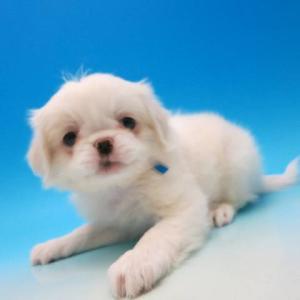 coo&riku(ペットショップ)で犬を買ったけどその後