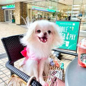 スターバックスコーヒー池袋サンシャインアルパ店テラス犬OK