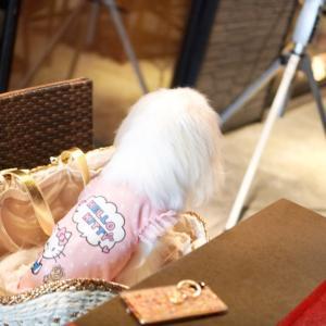 リオデグランデグリル六本木店テラス席犬OKなシュラスコ