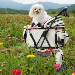 山中湖花の都公園犬OK