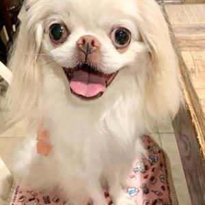 白いカレーうどん店内犬OK