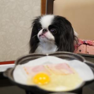 草津温泉音雅(おんが)④朝食、ドッグラン