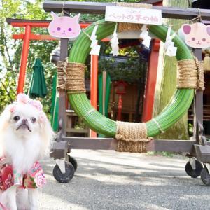 冠稲荷神社でペットの七五三①