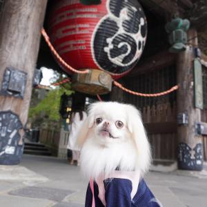 成田山新勝寺に行きました