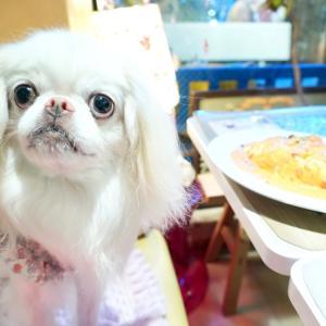 ライスカフェ店内犬OK