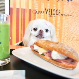 ベローチェで犬とランチ