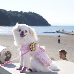 江ノ島の江島神社に犬連れ