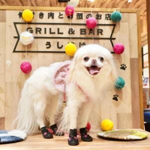 GRILL & BAR うしすけ ヴィーナスフォート店