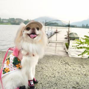 河口湖へお散歩