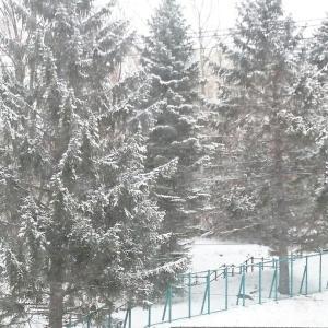 初積雪と初結露