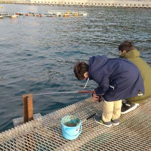 長男初めて魚をさばく