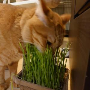 猫草とクール対策、買いました♪