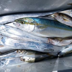 鮎から太刀魚釣りに