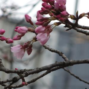 桜と研修会