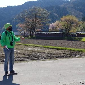春の歴史散歩 「桜の一乗谷を歩く」