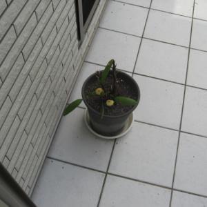 台風去って中庭掃除 サッシ溝が欠ける