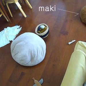 3ヶ月見守った、留守番中の子犬の行動とカメラのお陰で部屋がきれいに。