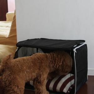 IKEAのペット用キャリーバッグを買ったけれど・・・