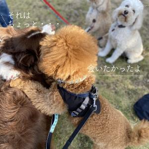 犬好き飼い主にありがちな言動