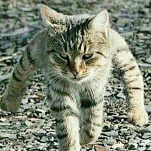 色々な話と、猫バンバン。
