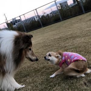 飼い犬に骨を折られる