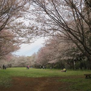 つくばお散歩トレーニング  2017.04.15