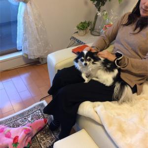 犬を人間の膝の上にのせたらなめられる?
