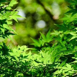 新宿御苑-青紅葉
