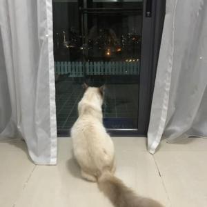 おネコ様、不死鳥の如く復活です!