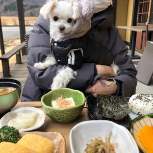 ワンコと一緒にかまど炊きご飯&3月のトリミング