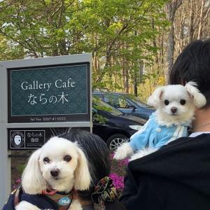 お友達と「Gallery Cafe ならの木」でランチ