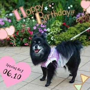 ぽーちゃん Happy 9th birthday