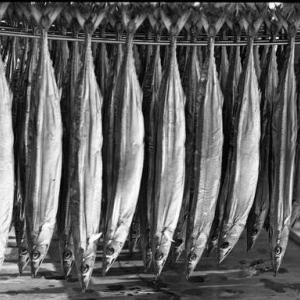 熊野の食 魚の食べ方 4 干物