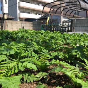 大根畑と多肉植物