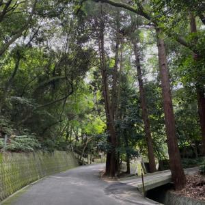 太山寺奥の院、帰りに「樹下」でランチ