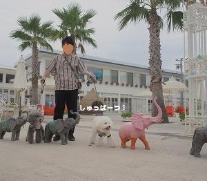 ジジポポ、ゾウさんと大行進!の巻♪ ~男子チームお誕生日旅行 その⑫~