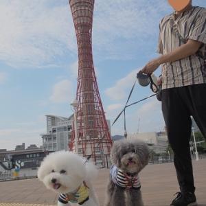 ジジポポ神戸初上陸!の巻♪ ~男子チームお誕生日旅行 その⑭~