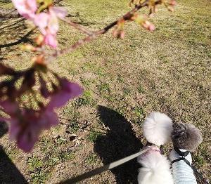 小さい春みーっけ♪の巻
