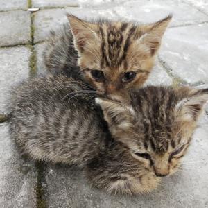 猫の避妊去勢・バリ島