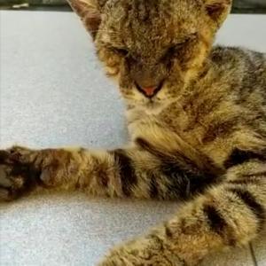 置き去りにされた猫の末路@インドネシア