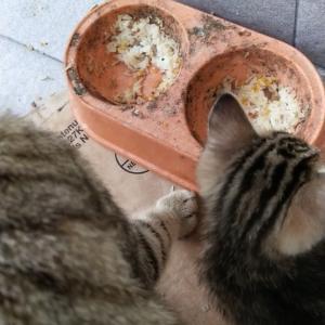 置き去りにされた猫の今まで