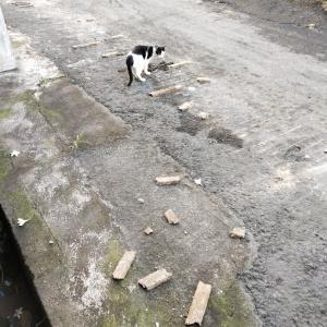 家の前の道、破壊される