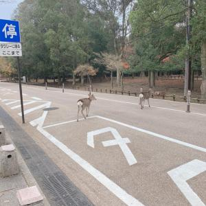 2019冬旅12/7奈良公園