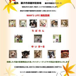 第12回藤沢市保健所合同譲渡会 開催予定