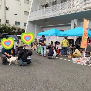 藤沢市 第12回合同譲渡会開催報告