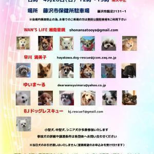 第8回 藤沢市合同譲渡会 開催のお知らせ