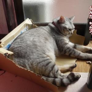 キキの箱。